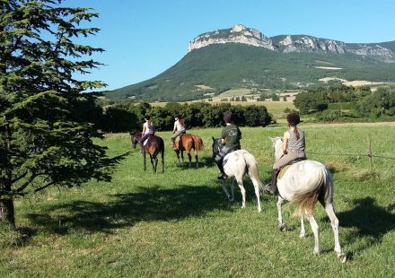 Equitation Les Crinières de Roche Colombe – Ferme équestre